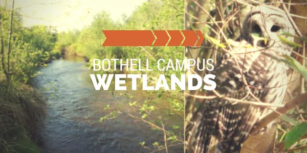 UWB Wetlands