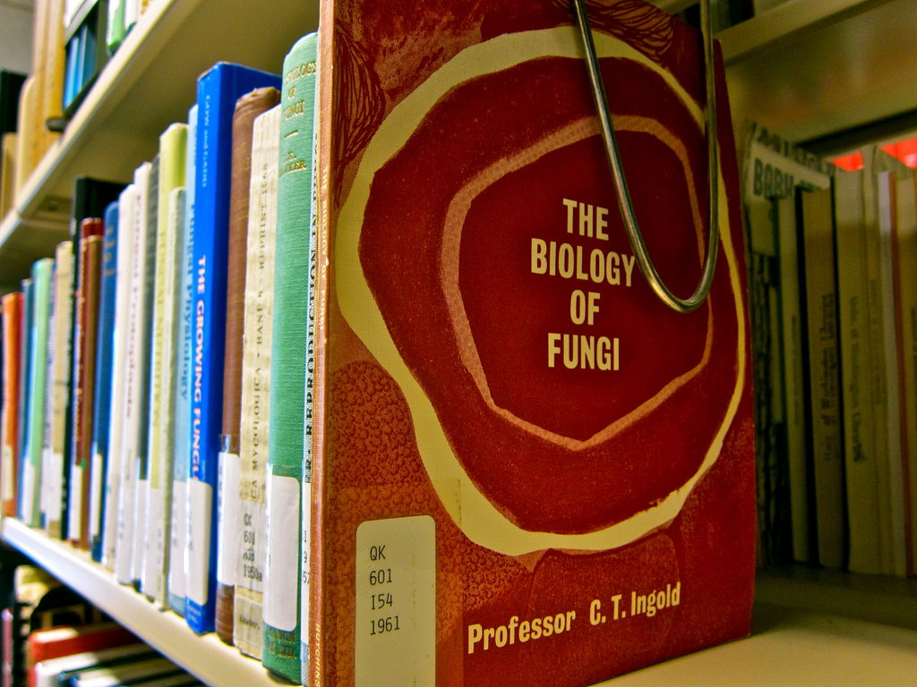 Library Books on Shelf-Closeup